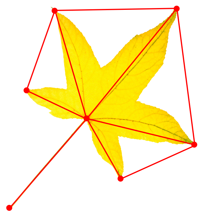 leaf-morphometrics-geometry
