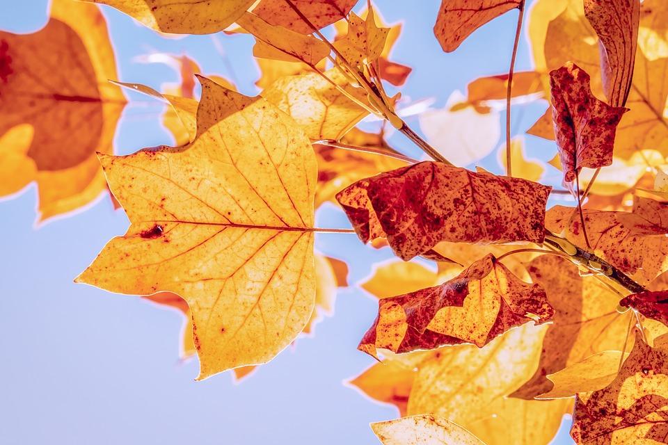 fall-equinox-leaves